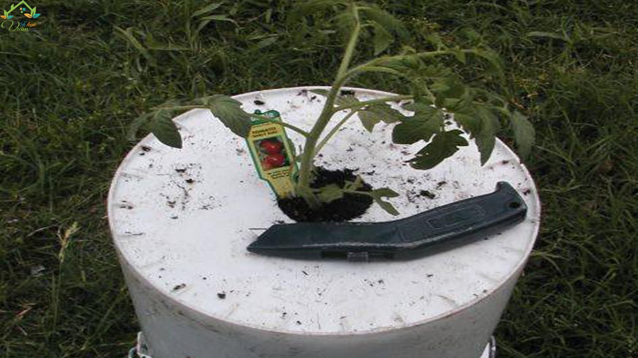 chậu trồng cà chua ngược