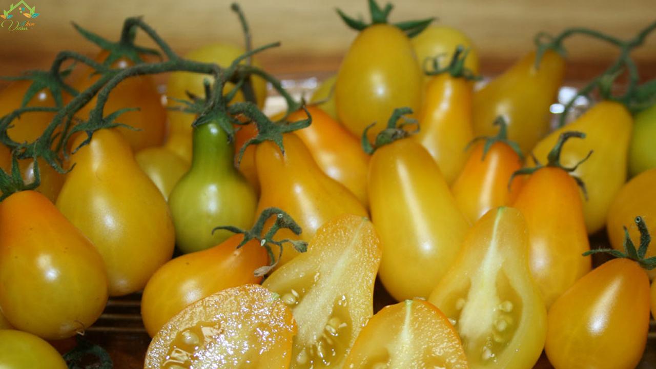 cà chua lê vàng