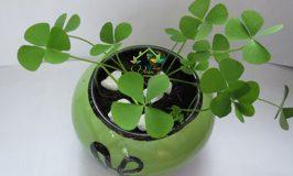 Trồng những chậu cây cảnh nhỏ xinh để bàn từ 7 loại hạt và củ.